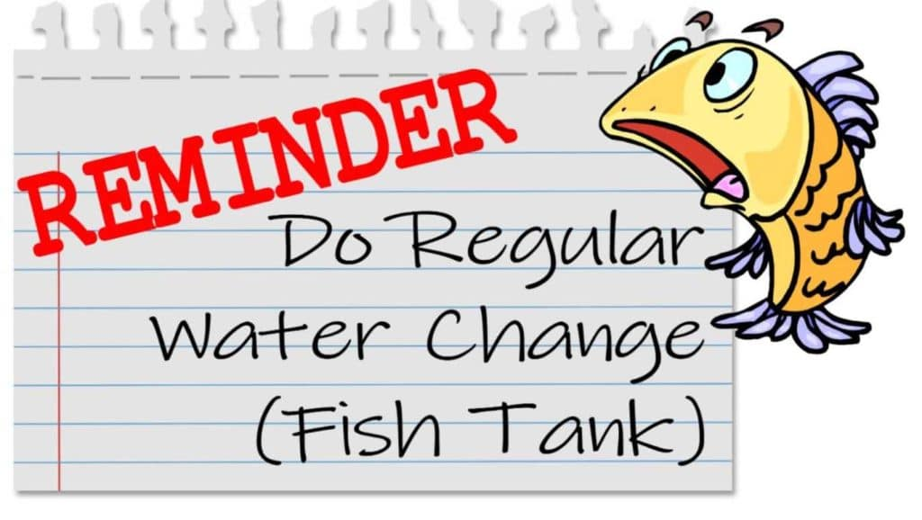 fish tank water change mistakes