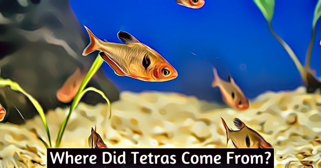where did tetras come from