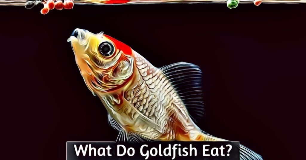 what do goldfish eat